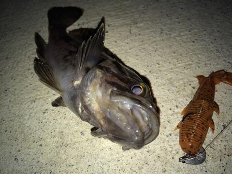 どんべい様より【スリーパーで真冬の釣り】が届きました!